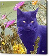 Black Cat Lurking In The Portulaca Acrylic Print