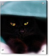 Black Cat Secrets Acrylic Print