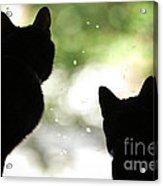 Black Cat Silhouettes Acrylic Print