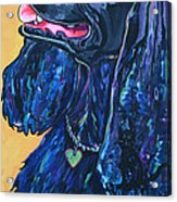 Black Cocker Spaniel Acrylic Print by Patti Schermerhorn