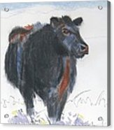 Black Cow Drawing Acrylic Print
