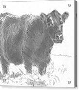 Black Cow Pencil Sketch Acrylic Print