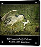 Black-crowned Night Heron At Martin Lake Acrylic Print