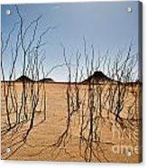 Black Desert Acrylic Print