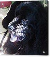 Black Dog Acrylic Print