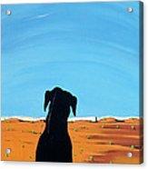 Black Dog In Chestertown, 1998 Acrylic Print