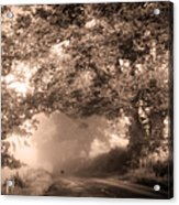 Black Dog On A Misty Road. Misty Roads Of Scotland Acrylic Print