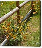 Black Eyed Susans In A Wildflower Meadow Acrylic Print