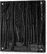 Black Forest Acrylic Print