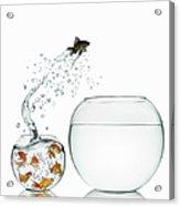 Black Goldfish Acrylic Print
