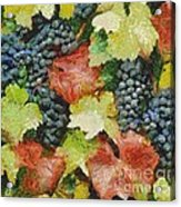 Black Grapes Acrylic Print