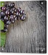 Black Grapes Acrylic Print