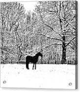 Black Horse In The Snow Acrylic Print