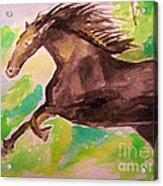Black Horse Acrylic Print by Sidney Holmes