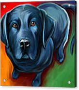 Black Lab Acrylic Print