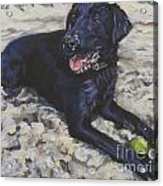 Black Lab On The Beach Acrylic Print