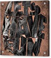 Black Labrador Typography Artwork Acrylic Print