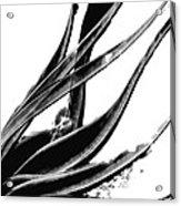 Black Magic 303 By Sharon Cummings Acrylic Print