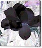 Black Magnolia Acrylic Print