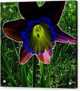 Black Narcissus Acrylic Print