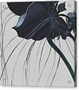 Black Orchid Acrylic Print