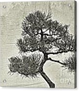 Black Pine Bonsai In Monochrome Acrylic Print