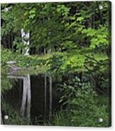 Black Pond And Maple Acrylic Print by Colleen Williams