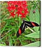 Black Red And White Butterfly Acrylic Print