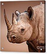 Black Rhinoceros Portrait Acrylic Print by Johan Swanepoel