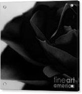 Black Rose Abstract Acrylic Print