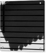 Black Shadow Acrylic Print
