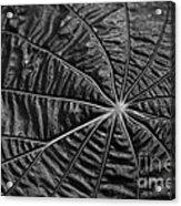 Black Star.. Acrylic Print