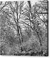 Black Stream Acrylic Print