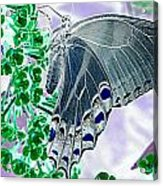 Black Swallowtail Abstract  Acrylic Print by Kim Galluzzo Wozniak