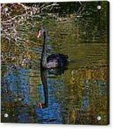 Black Swan 4 Acrylic Print