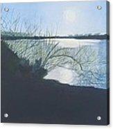 Black Swan Lake Acrylic Print