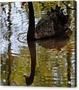 Black Swan Series Iv Acrylic Print