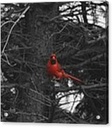 Black White And Red Acrylic Print