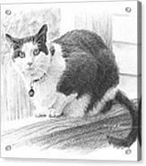 Black White Cat Pencil Portrait Acrylic Print