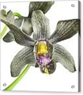 Black Yellow And Purple Orchid Acrylic Print