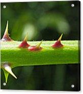 Blackberry Thorns Acrylic Print