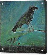 Blackbird Redberry Acrylic Print