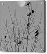 Blackbirds By The Moon Acrylic Print