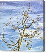 Blackbirds In A Tree Acrylic Print