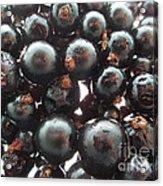 Blackcurrant Affairs Acrylic Print