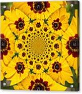 Blackeyed Susan Kaleidoscope Acrylic Print