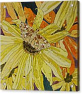 Blackeyed Susans And Butterfly Acrylic Print