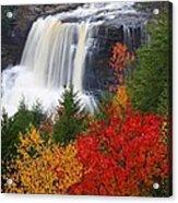 Blackwater Falls In Autumn Acrylic Print by Jetson Nguyen