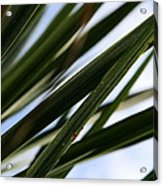 Blades Of Grass Acrylic Print