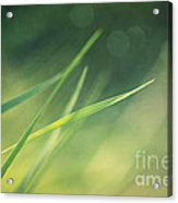 Blades Of Grass Bathing In The Sun Acrylic Print